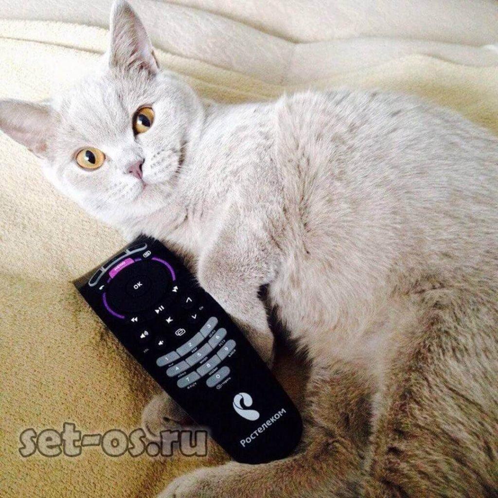 список кодов пульта ростелеком для телевизоров